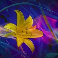 Цветочная радуга :: Владимир Кроливец