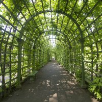 Летний сад :: Ольга Гусакова