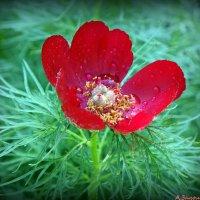 Весенние цветы :: Андрей Заломленков