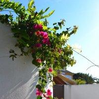 Цветущая Испания :: Ольга