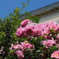 Цветочный хоровод-85. :: Руслан Грицунь