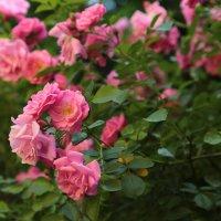 Цветочный хоровод-83. :: Руслан Грицунь