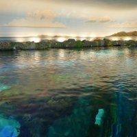 Так выглядит один из аквариумов Ripley's Aquarium of Canada :: Юрий Поляков