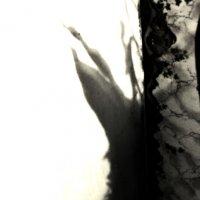 "Из серии ""Оттиски света"" :: Катерина Чебышева"