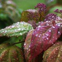 После дождя. :: kolin marsh