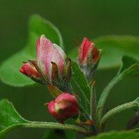 Цветы весны. :: Николай Масляев