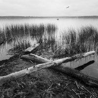 На острове. :: Alexander Antonov