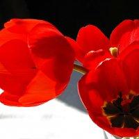 Красное с черным :: Наталья