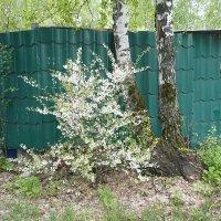 весна :: натальябонд бондаренко