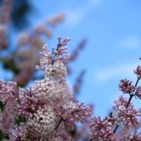 ...весенние краски.. :: Ирина Тазеева