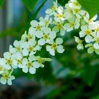 Снова вокруг весна бушует.... :: Светлана Игнатьева