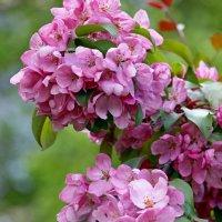 Розовые грёзы... :: Tatiana Markova