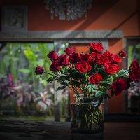 розы :: Александр