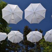 Парящие зонтики :: Наталья Левина