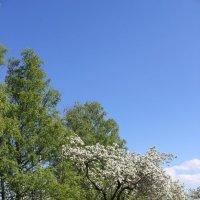 Сад и весна. :: Наталья Лунева