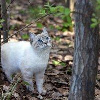 охотник на белок :: Олег Петрушов
