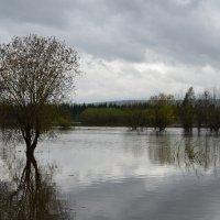 Наводнение :: Николай Sergeevich