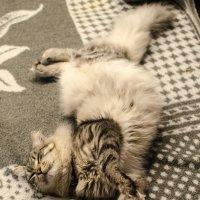 Спать без задних ног - это примерно так. :: Сергей Щербаков