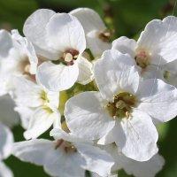 придорожные цветы... :: Ирина