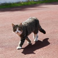 Кот,который гулял сам по себе... :: Ирина Рябкова