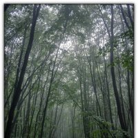таинственный лес (вариант в цвете) :: Sergey Bagach