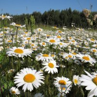 Лето -это маленькая жизнь... :: Ната Волга