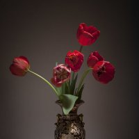 Тюльпановый вечер. :: Лилия *
