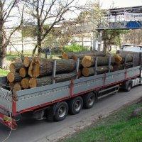 Лесозаготовка :: Пётр П