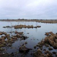 Торфяные болота :: Мария Кондрашова