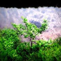 Деревце у воды :: лена григорьева