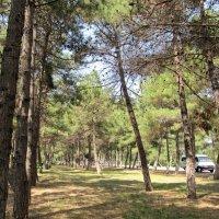 Сосновый парк :: Вера Щукина