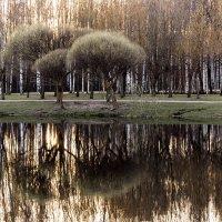 Закат в Парке Сосновка :: Алексей Корнеев