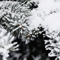зима :: Дарья Ярыгина