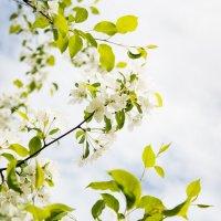 Весна :: Вадим Громов