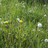 Летняя трава :: Aнна Зарубина