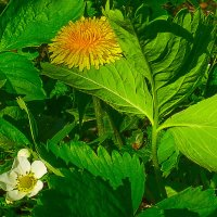 Свидание двух цветков. :: Валерий Изотов
