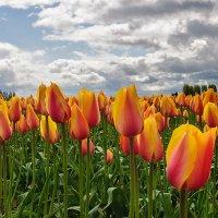 цветы весны :: Galina