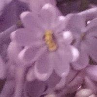 вот такие цветочки попадаются (и часто) на ветке :: Galina194701