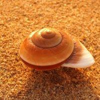 Морские тайны :: Swetlana V
