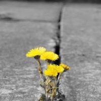 Весенние цветы :: Николай Агапитов