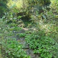 Горный  ручей  в  Карпатском  лесу :: Андрей  Васильевич Коляскин