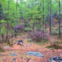 В сказочном лесу :: Ольга