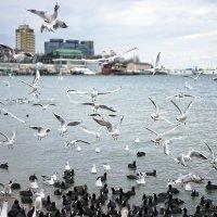 Чайки :: Allex Anapa