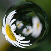цветочный калейдоскоп  ромашковый :: Маргарита Лапина