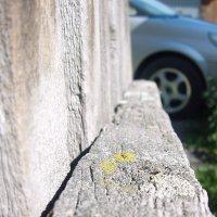 старый забор :: Ольга Савич