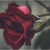 В тебе есть ВСЁ- шипы и розы… Пленял меня  твой пыл и слёзы… :: Александр Вивчарик