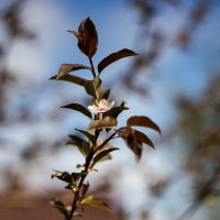 Весна :: Оксана Пучкова