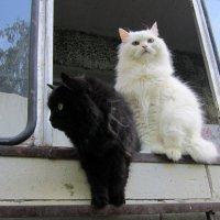 Инь и Янь . :: Мила Бовкун
