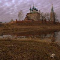 утренняя прогулка кошки :: Александра