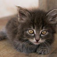 котики спасут мир :: Iri K.